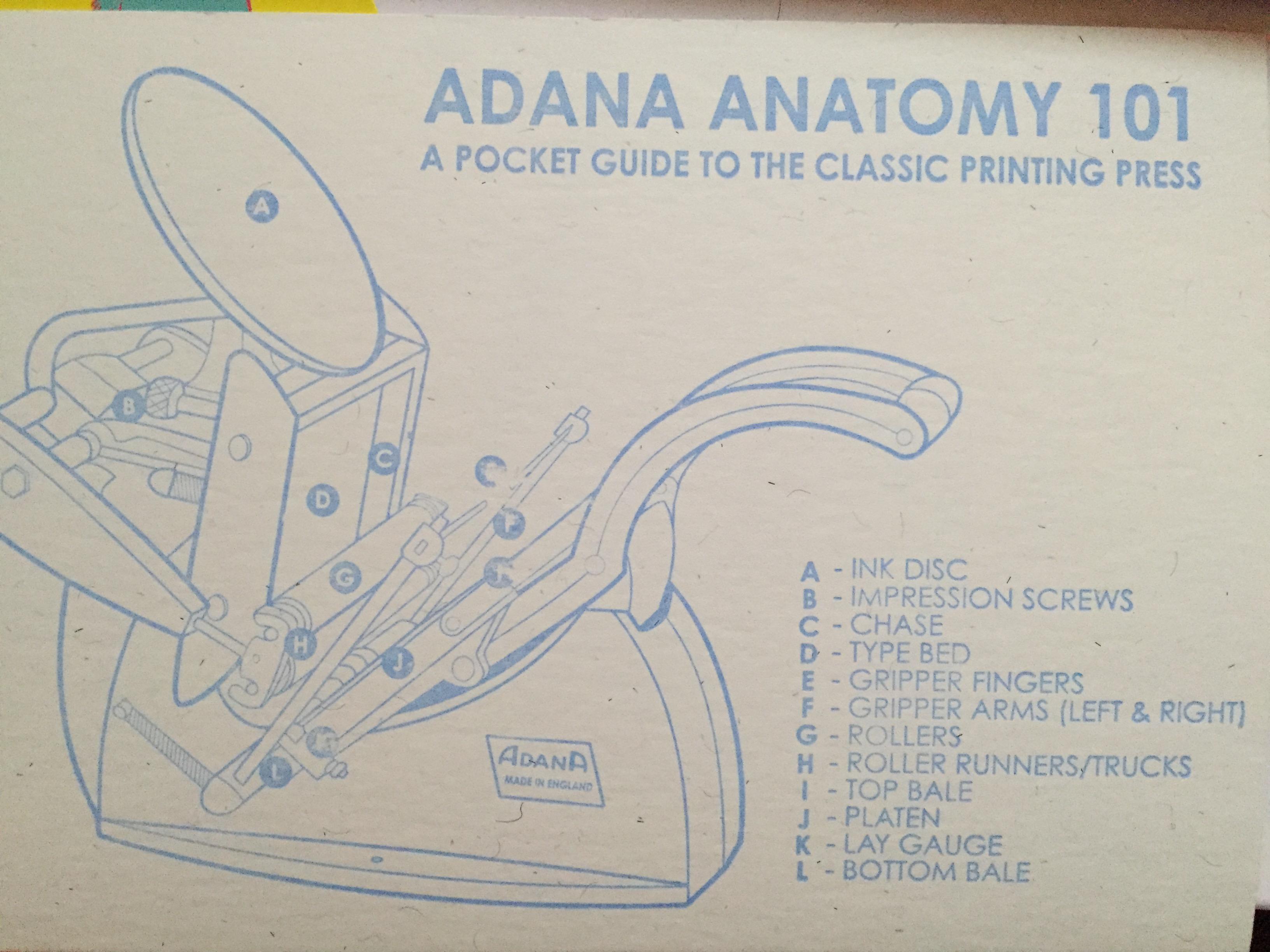 Adana Anatomy